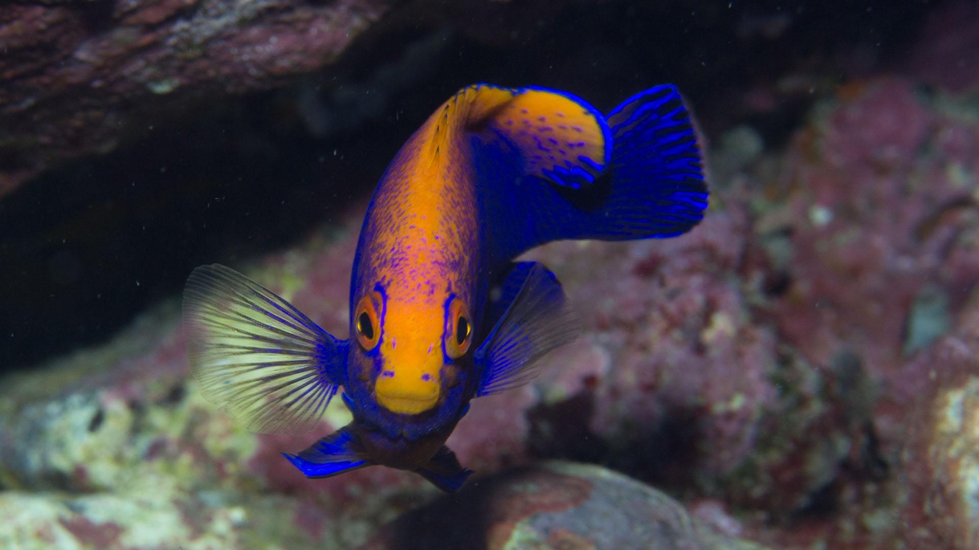 fish Egg-Island
